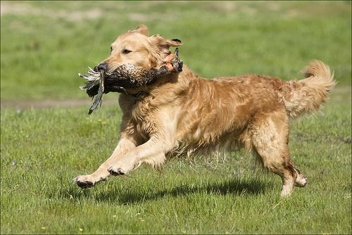 Henley Dog Training